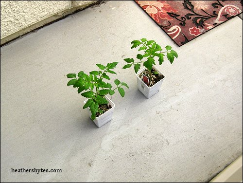EarthTainer Container Gardening